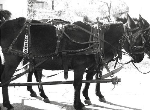 mule-plow